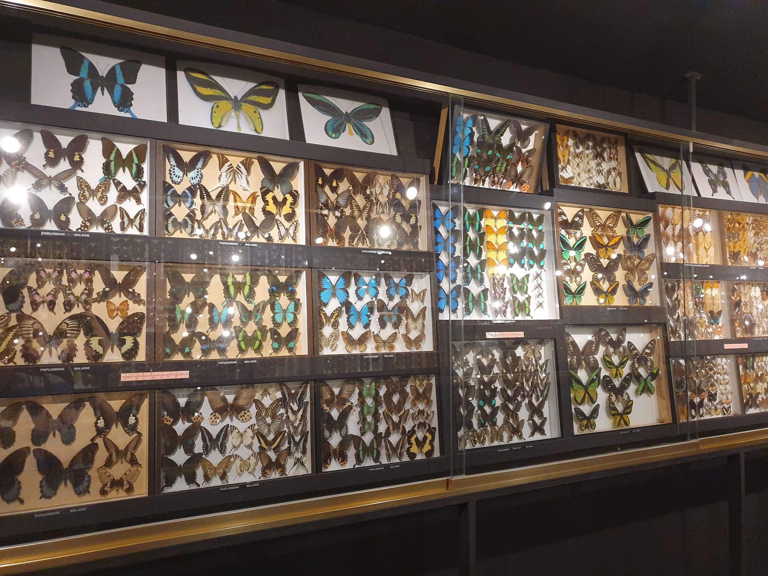Galeria fluturilor