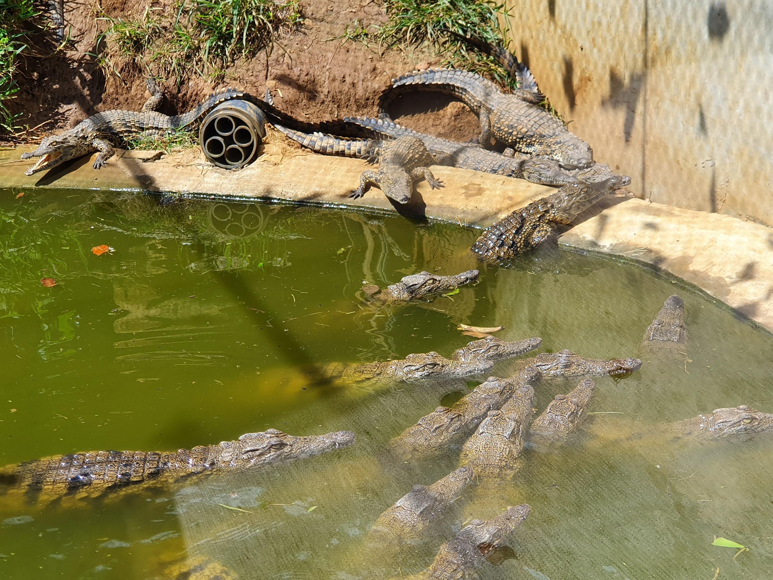 Ferma de crocodili