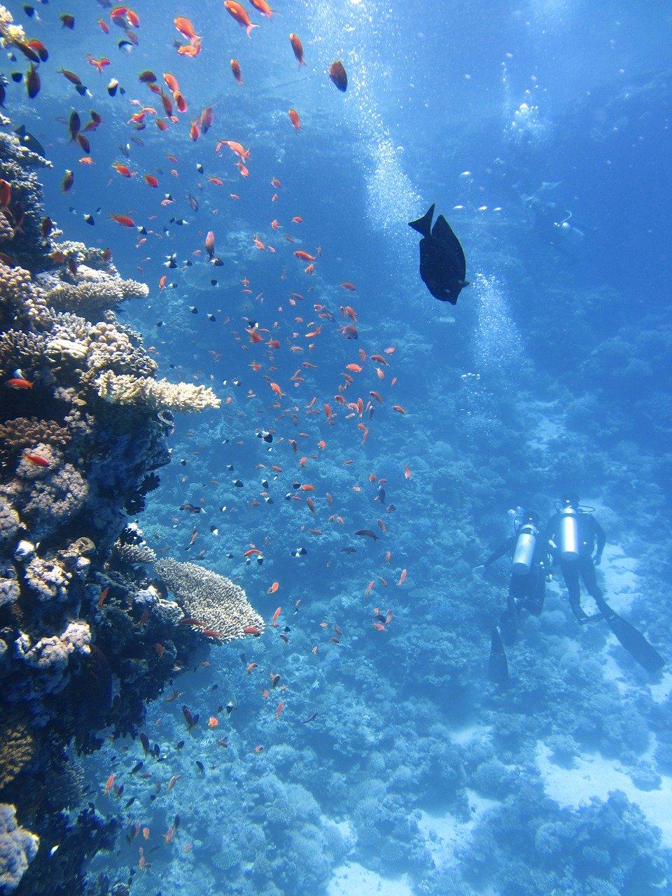 divers, underwater, ocean