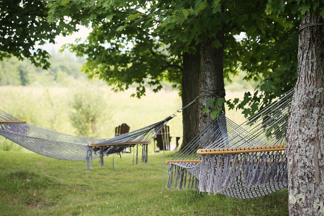 hammocks, trees, summer