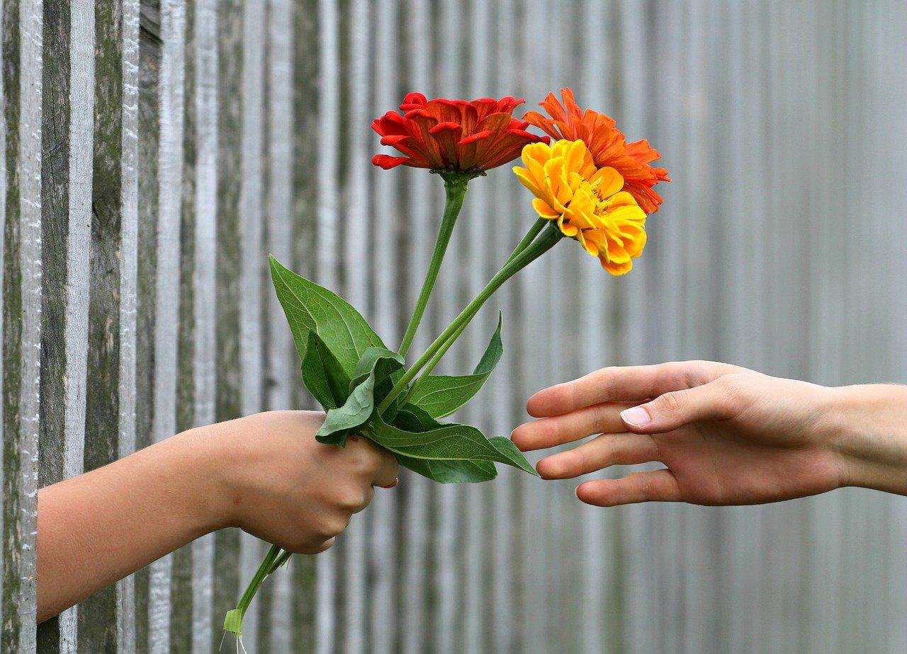 ofera o floare slanic moldova