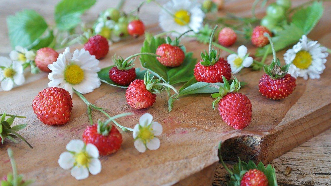 strawberries, wild strawberries, daisy pixabay