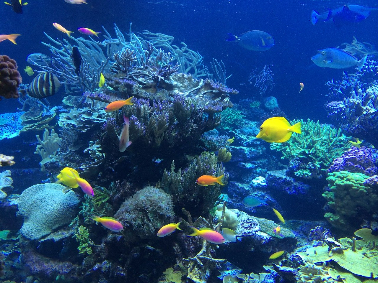 underwater, fish, tropical