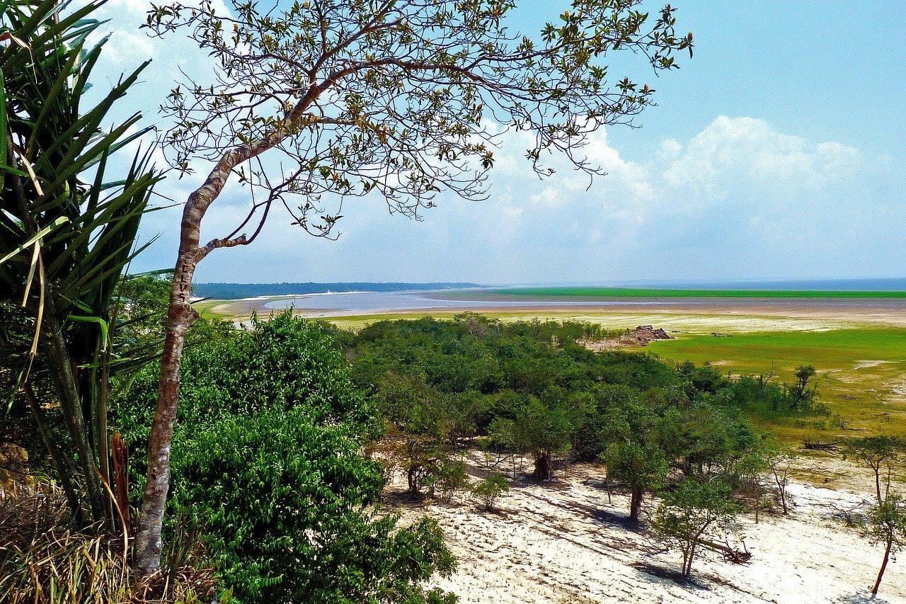 amazon, rainforest, water